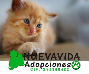 Nueva vida adopciones