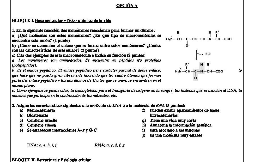 Biología – solución